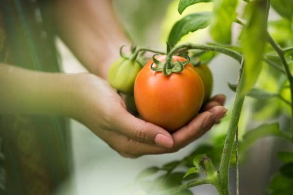 آموزش فوت و فن سبزی کاری در آپارتمان