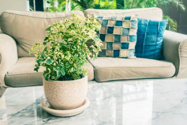 فوت و فن اصلی مراقبت از گلها و گیاهان آپارتمانی
