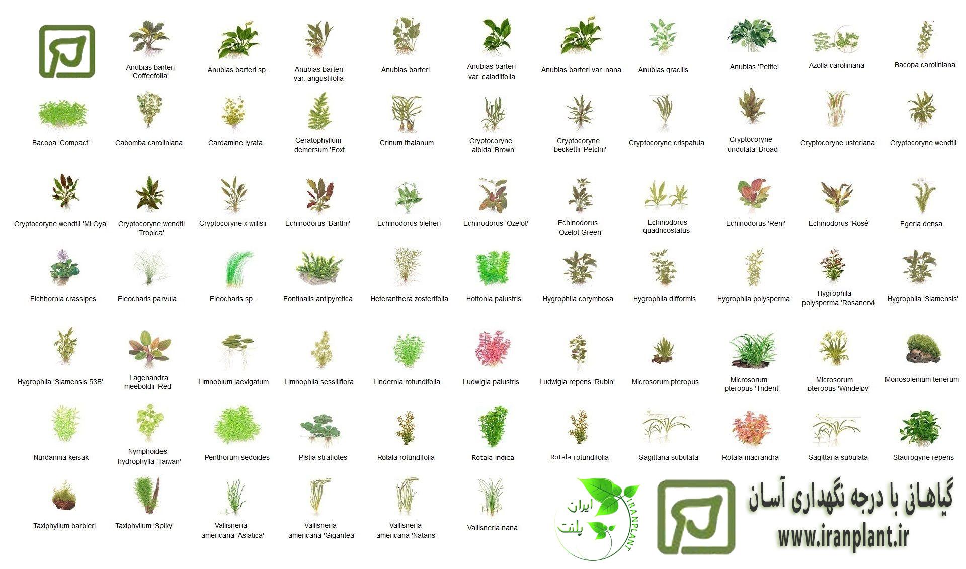 نگاهی کلی به گیاهان آبزی